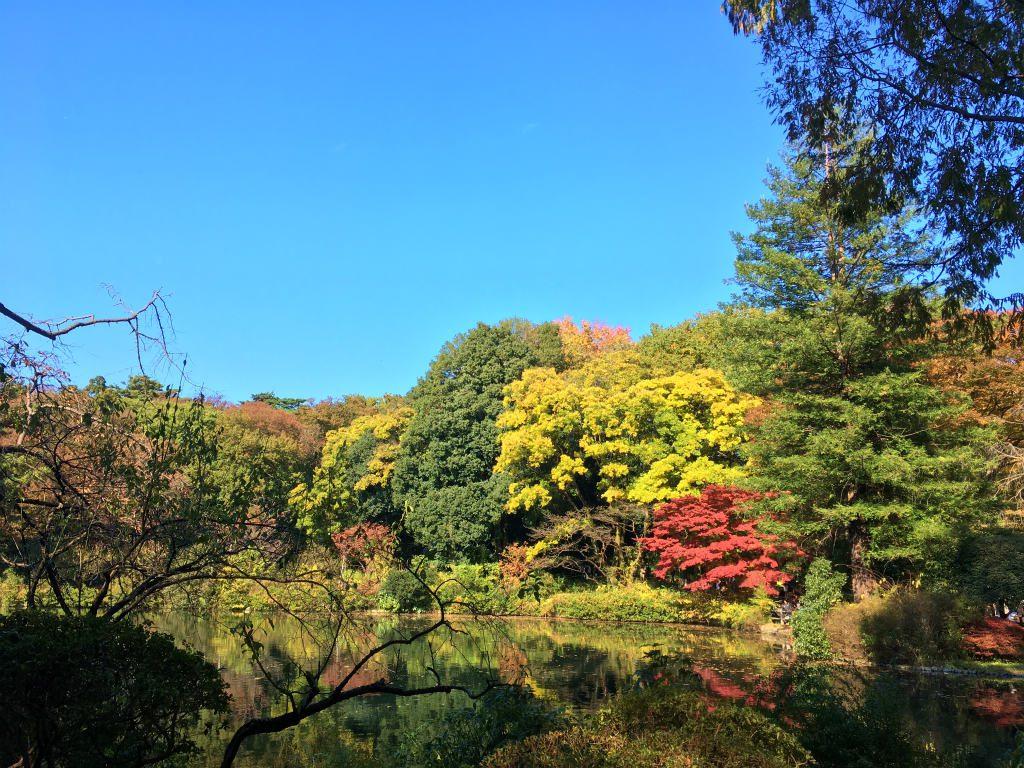 日立製作所中央研究所庭園の紅葉