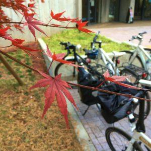 野川公園の紅葉と自転車