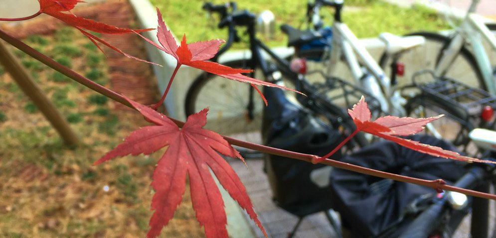 野川公園の紅葉とスポーツバイク